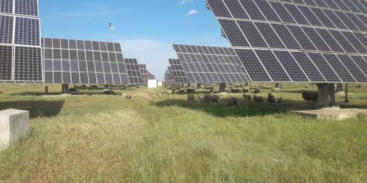Desbroce sostenible placas solares